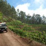 Jeep tour Safari on the Vineyards