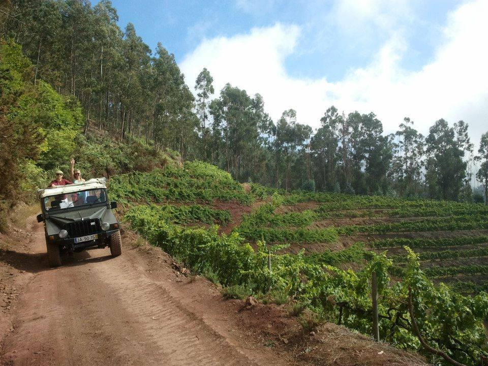 Jeep tour Safari on the Vineyards